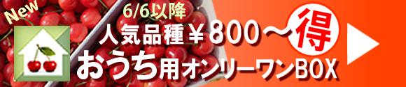 自宅用お得BOX山形東根産さくらんぼ通販、槙農園