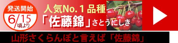 山形さくらんぼ通販、佐藤錦-東根市槙農園