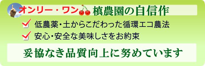 さくらんぼ政宗-山形槙農園オリジナルブランド