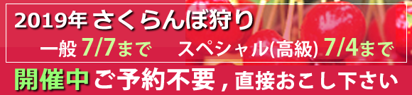 2019年 さくらんぼ狩り最新状況