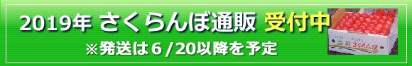 2019さくらんぼ通販予定-山形槙農園
