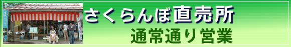 さくらんぼ直売所営業中 山形東根市